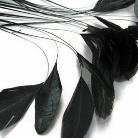 Black Feather Coquetips