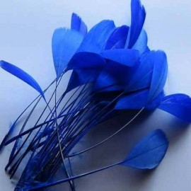 Royal Blue Feather Coquetips