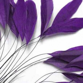 Plumes Coquetips Violet
